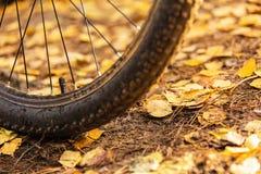 Entrerrosca de la bicicleta Foto de archivo libre de regalías