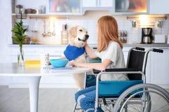 Entretenez le chien près de la fille dans le fauteuil roulant Image libre de droits