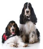 Entretenez les chiens image libre de droits