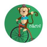 Entretenimiento del circo Imágenes de archivo libres de regalías