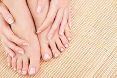Entretenir des jambes de femme Image stock
