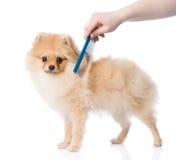 Entretenir des cheveux de chien regarder l'appareil-photo photographie stock