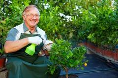 Entretenir heureux de jardinier des centrales en serre chaude image libre de droits