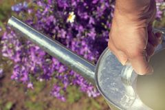 Entretenir le lit de fleur photos libres de droits