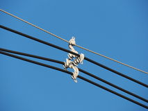 Entretoise de câble de transmission de l'électricité Photos stock
