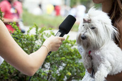 Entrevista dos media Fotografia de Stock Royalty Free