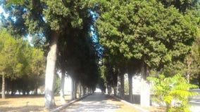 Entrez dans le jardin par les arbres photo stock