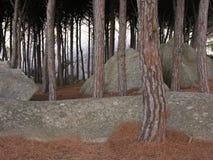 Entrez dans les bois b photographie stock libre de droits