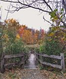 Entri nella foresta Fotografie Stock