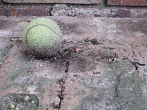 Entropy by Kambas. A tennis ball that is degrading, the effects of entropy, brick background Stock Images