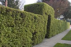 Entry Hedge stock images