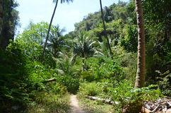Entry to the jungle 1. Beginning of the jungle on a thai island, Andaman Sea Stock Images