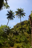 Entry to the jungle 2. Beginning of the jungle on a thai island, Andaman Sea Royalty Free Stock Photos
