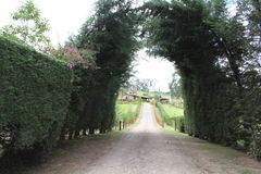 The entry to the road. Arch made with trees showing the way to the house stock photo