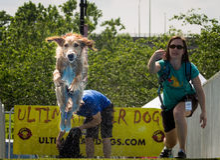 Entscheidende Luft-Hunde Subarus stockfoto