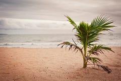Entspannen Sie sich durch das Meer Stockfoto