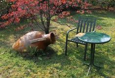 Entspannen Sie sich im Garten Lizenzfreies Stockfoto