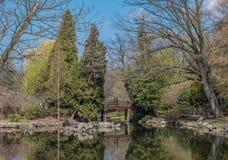 Entspannen Sie sich im ruhigen Wetter der Parkvorfrühlingsgrün-Bäume lizenzfreies stockbild