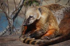 Entspannen Sie sich im Tierpark stockfoto