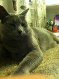 Entspannen Sie sich Katze Stockbilder