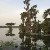 Entspannen Sie sich am See Martin, Louisiana unter schönen Zypresse-Bäumen Lizenzfreies Stockfoto