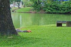 Entspannend in der üppigen grünen Parkschönheit, legt jemand versteckt von der Ansicht, an einem faulen Nachmittag lizenzfreie stockbilder
