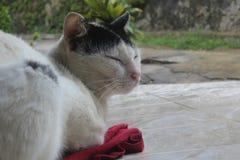 Entspannende Katze Lizenzfreie Stockfotos