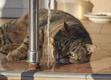 Entspannende Katze Lizenzfreie Stockfotografie