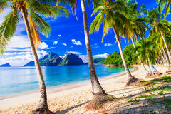 Entspannende tropische Landschaft mit schönem Palm Beach Stockfoto