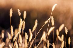 Entspannende und ruhige Szene eines wilden Feldes lizenzfreie stockfotos