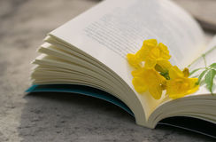 Entspannender Feiertag mit Lieblingsbüchern Lizenzfreies Stockfoto