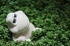 Entspannender Frosch Lizenzfreies Stockfoto