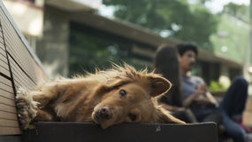 Entspannender Hund Stockbilder