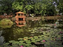 Entspannender Park Tasik Melati in Kangar, Perlis, Malaysia Stockfotografie