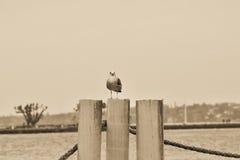 Entspannender Vogel Lizenzfreie Stockfotos