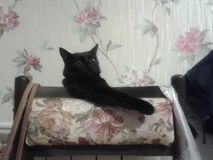 Entspannte Katze Lizenzfreies Stockbild