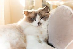 Entspannte Katze Lizenzfreie Stockfotografie