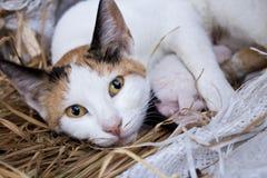 Entspannte Katze, welche die Kamera betrachtet stockfotografie