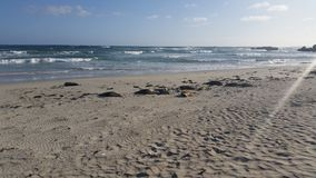 Entspannung an der Dichtungs-Bucht Lizenzfreie Stockfotografie