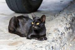 Entspannung der schwarzen Katze im Freien Stockbilder