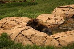 Entspannung in einem Bad Stockbild
