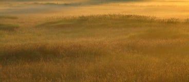 Entspannung - goldener Sommer - Naturlandschaft Lizenzfreie Stockfotografie