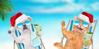 Entspannungsc$sitzen der Katze und des Hundes auf deckchair mit Cocktail auf dem Seehintergrund lizenzfreies stockfoto
