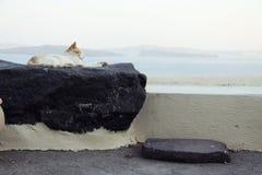 Entspannungskatze in Oia, Santorini lizenzfreie stockbilder