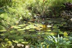 Entspannungslilienteich im Dschungel von Grand Cayman-Inseln stockbild