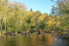 Entspannungsnachmittag an den goldenen Gärten parken, Seattle Washington lizenzfreie stockbilder