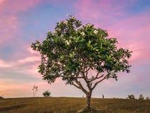 Entspannungssonnenuntergangansicht von Goodshepherd Banawa Cebu Philippinen lizenzfreie stockfotos