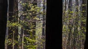 Entspringen Sie mit frischen jungen grünen Blättern im Holz Stockbild