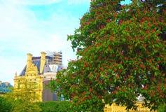 Entspringen Sie in Paris, rote Kastanien in Tuileries-Garten in Paris, Frankreich Stockfotos