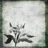 Entsteinen Sie Blume stock abbildung